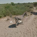 Google Street e il mistero dell'asino 3