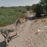 Google Street e il mistero dell'asino 4