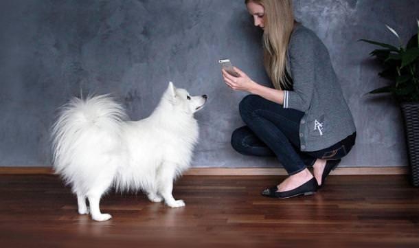 L' iPhone può controllare il vostro cane? 1