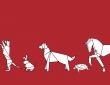 Amici Animali: disponibile la prima serie di podcast dedicati interamente al mondo animale 14
